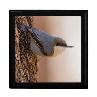Brown-headed Nuthatch Gift Box