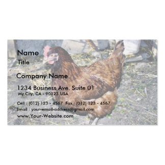 Brown Hen On The Back Yard Pack Of Standard Business Cards