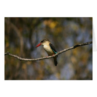 Brown-hooded Kingfisher Card