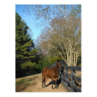 Brown Horse against a Fence Postcard