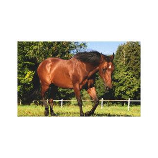 brown horse canvas