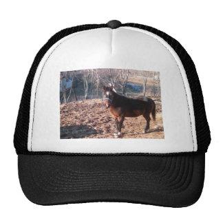 Brown Horse Cap