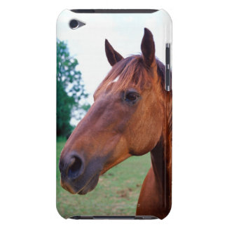 Brown horse, close-up barely there iPod cases