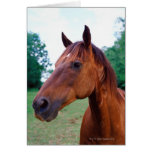 Brown horse, close-up card