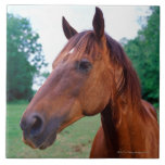 Brown horse, close-up large square tile