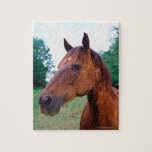 Brown horse, close-up puzzles