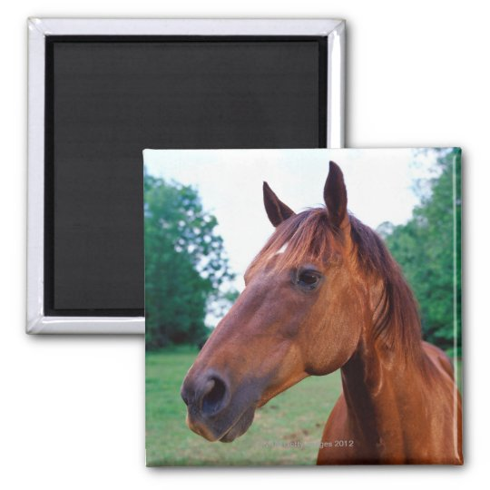 Brown horse, close-up square magnet