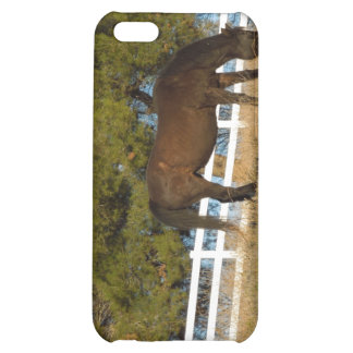 Brown Horse Grazing iPhone 5C Covers