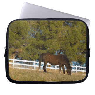 Brown Horse Grazing Computer Sleeves