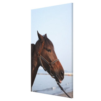 Brown horse head canvas print