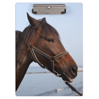 Brown horse head clipboards