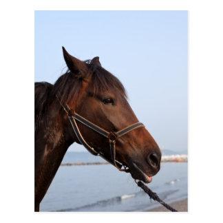 Brown horse head postcard