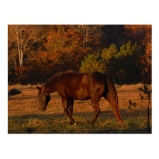 Brown horse in a Autumn feild Postcard