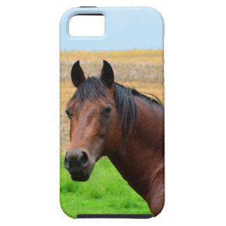 Brown Horse in a Field iPhone 5 Case
