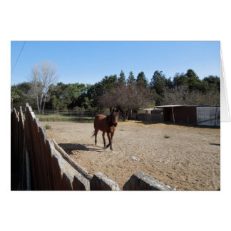 Brown Horse in Los Alamos, CA Greeting Card