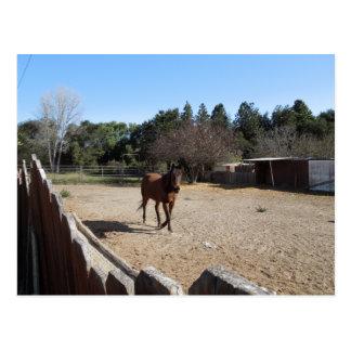 Brown Horse in Los Alamos, CA Postcard