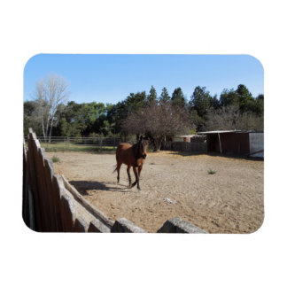Brown Horse in Los Alamos, CA Rectangular Photo Magnet