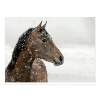 Brown Horse in Snow Postcard