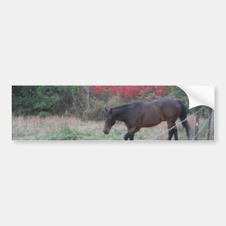 Brown horse in the red autumn trees bumper sticker