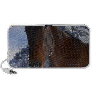 Brown horse in winter laptop speakers
