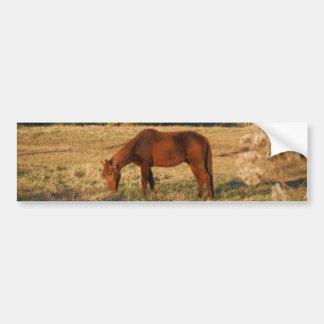 Brown horse in  yellow tree field bumper sticker