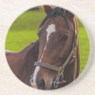 Brown Horse Portrait Beverage Coasters