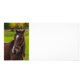 Brown Horse Portrait Customised Photo Card