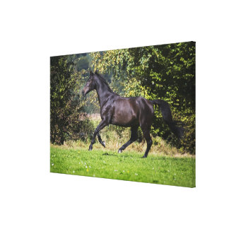 brown horse running on meadow canvas print
