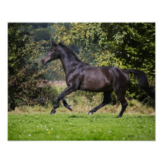 brown horse running on meadow poster