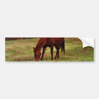 Brown Horse w/ White Nose at Woods Edge Bumper Sticker