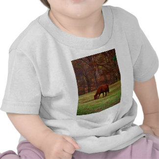 Brown Horse w/ White Nose at Woods Edge Shirts