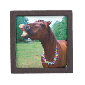 Brown horse wearing necklace, baring teeth, premium trinket boxes