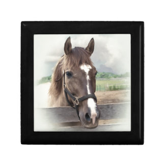 Brown Horse with Bridle Gift Box