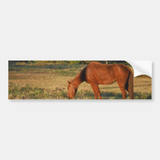 Brown Horse with Pine Trees Bumper Sticker