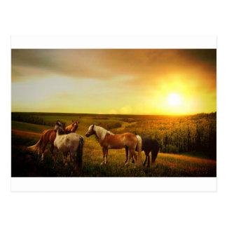 Brown Horses in Field Postcard
