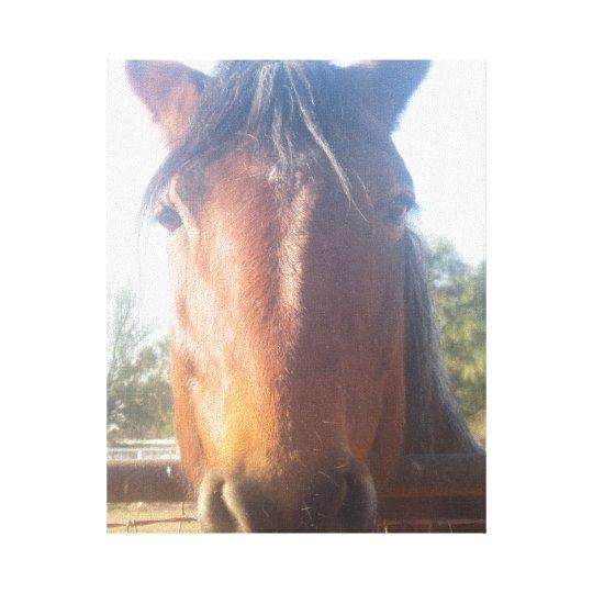 Brown Horsey Love Canvas