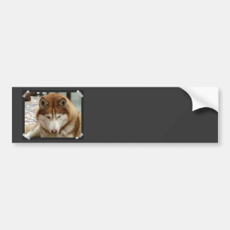 Brown Husky Bumper Stickers
