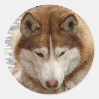 Brown Husky Stickers