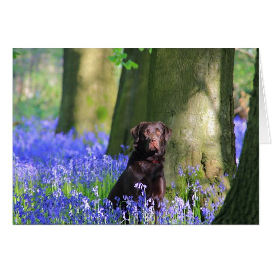 Brown Labrador in Bluebells Card