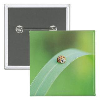 Brown ladybug 15 cm square badge