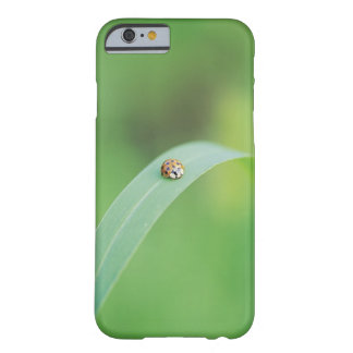 Brown ladybug barely there iPhone 6 case