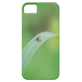 Brown ladybug case for the iPhone 5