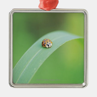 Brown ladybug christmas ornament