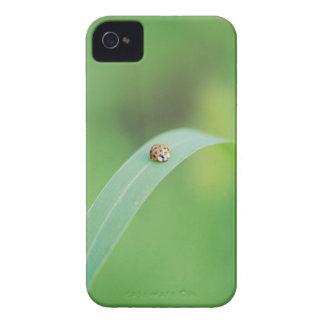 Brown ladybug iPhone 4 Case-Mate case