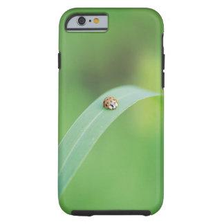 Brown ladybug tough iPhone 6 case