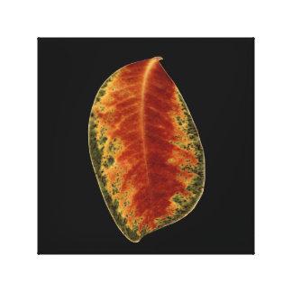 Brown Leaf Still Life Fine Art Photograph Canvas Print