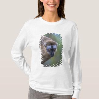 Brown lemur (Eulemur fulvus) in the forest 2 T-Shirt