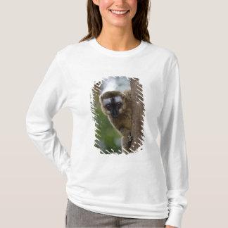 Brown lemur (Eulemur fulvus) in the forest 3 T-Shirt