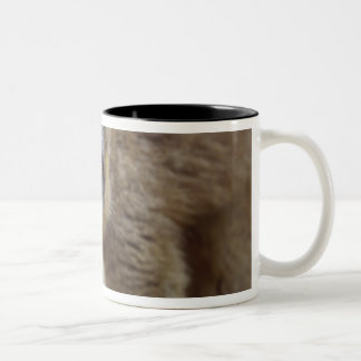 Brown lemur (Eulemur fulvus) in the forest Two-Tone Coffee Mug