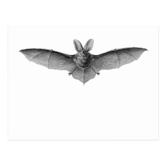 Brown & Lesser Long-eared bats Postcard